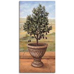 Artland Wandbild Olivenbaum, Pflanzen (1 Stück) 30 cm x 60 cm
