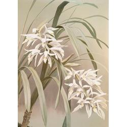 WOHNIDEE-Kollektion Fototapete Orchidee