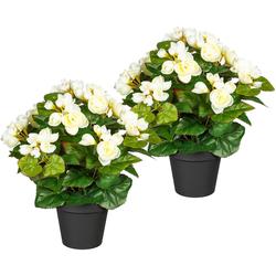 Künstliche Zimmerpflanze Eleonore Begonien, DELAVITA, Höhe 28 cm, 2er Set weiß
