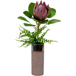 Kunstpflanze Protea, Höhe 56 cm