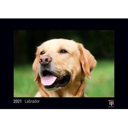 Labrador 2021