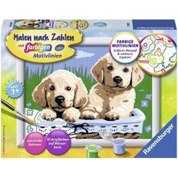 Malen nach Zahlen - Süße Hundewelpen