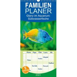 Glanz im Aquarium: Süßwasserfische - Familienplaner hoch (Wandkalender 2021  21 cm x 45 cm hoch)