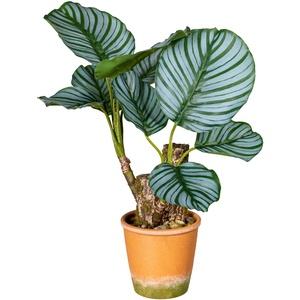 Künstliche Calatheapflanze im Paperpot  9 Blätter  45 cm