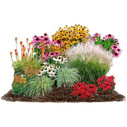 BCM Beetpflanze Sommerliebe Set, 24 Pflanzen