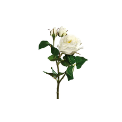 Rose mit einer Blüte in cream, 46 cm