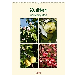 Quitten und Zierquitten (Wandkalender 2021 DIN A3 hoch)