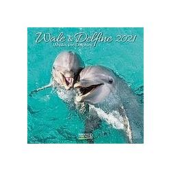 Wale und Delfine 2021