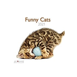 Funny Cats 2021