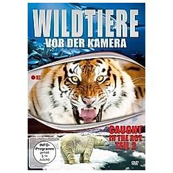 Wildtiere vor der Kamera - Caught in the Act (Teil 2) - DVD  Filme