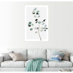 Posterlounge Wandbild, Silberdollar-Eukalyptus 100 cm x 150 cm