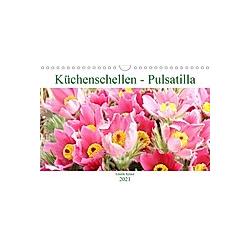 Küchenschellen Pulsatilla (Wandkalender 2021 DIN A4 quer)