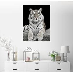 Posterlounge Wandbild, Stattlicher Tiger mit Farbakzenten 100 cm x 130 cm