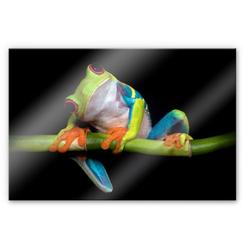 Wall-Art Küchenrückwand Spritzschutz Frisch Green Frog, (1-tlg) 60 cm x 40 cm x 0,4 cm