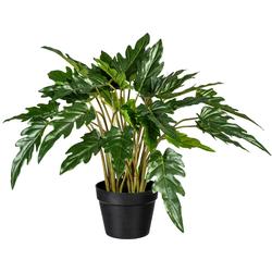 Künstliche Zimmerpflanze Philodendron xanadu Philodendron xanadu, Creativ green, Höhe 60 cm