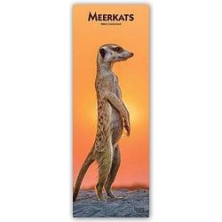 Meerkats - Erdmännchen 2021