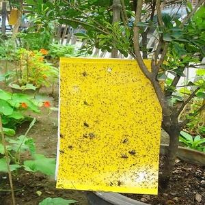 ARTOCT Gelbfalle, Gelbtafeln, 20 Gelbsticker, Doppelseitige gelbe klebrige Fliegenfallen, perfekt gegen Ungeziefer in Ihrem Garten- Gegen Trauermücken, Blattläuse, Minierfliegen und weiße Fliegen
