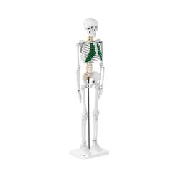 Mini Skelett PHY-SK-5
