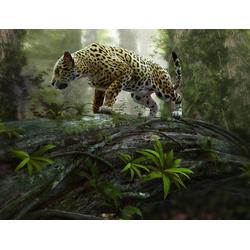 Fototapete Jaguar on the Prowl, Home affaire, grün