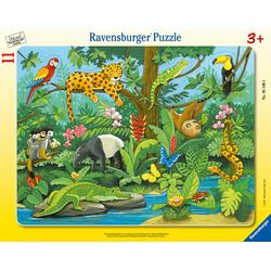 Tiere im Regenwald