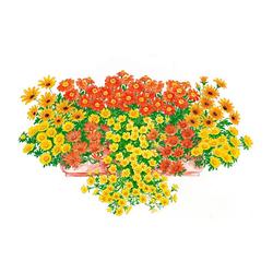 BCM Beetpflanze Sonnige Farben Set, 18 Pflanzen mit Erde