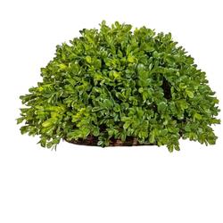 Kunstpflanze Buchsbaum Halbkugel Buchsbaum, Creativ green, Höhe 21 cm