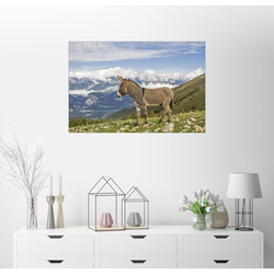 Posterlounge Wandbild, Esel auf einer einsamen Bergwiese 30 cm x 20 cm
