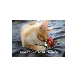 Le chat Gaston en vedette (Calendrier mural 2021 DIN A4 horizontal)