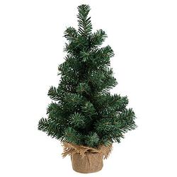 Tannenbaum, 50 cm