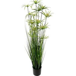 Kunstpflanze Zyperngras im Topf, I.GE.A., Höhe 150 cm 28 cm x 150 cm x 28 cm