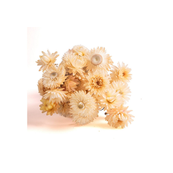 Trockenblume Strohblumen Helichrysum Trockenblumen Strauß Bund Blumen getrocknet DIY Strohblume, ROSEMARIE SCHULZ Heidelberg, Höhe 10 cm weiß