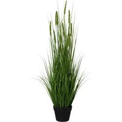 Kunstpflanze »Penisetum«, Kunstpflanzen, 42073964-0 grün H: 110 cm grün