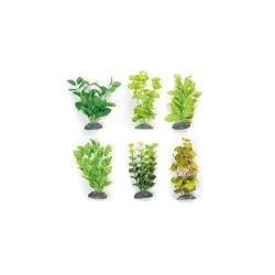 Seidenpflanzen aus Brasilien XS Klein