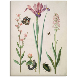 Artland Wandbild Admiral, Rose Iris Knabenkraut., Pflanzen (1 Stück) 90 cm x 120 cm