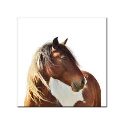 Bilderdepot24 Leinwandbild, Leinwandbild - Pferd - Portrait 40 cm x 40 cm