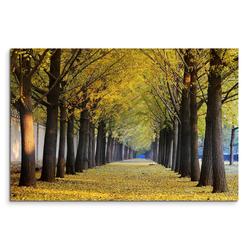 Sinus Art Leinwandbild 120x80cm Wandbild Ginkgobäume Allee Herbst