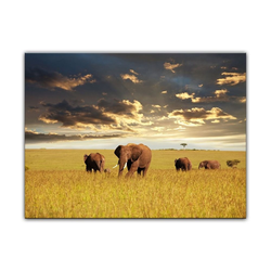 Bilderdepot24 Leinwandbild, Leinwandbild - Elefanten 60 cm x 50 cm