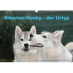 Siberian Husky - der Urtyp (Wandkalender 2021 DIN A3 quer)