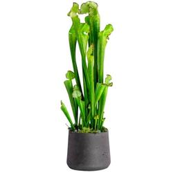 Kunstpflanze Kobralilie, Blütenwerk, Höhe 57 cm