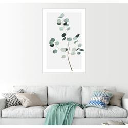 Posterlounge Wandbild, Silberdollar-Eukalyptus 20 cm x 30 cm