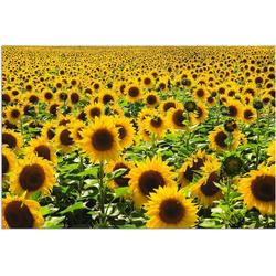 Artland Wandbild Sonnenblumenfeld, Blumen (1 Stück) 30 cm x 20 cm