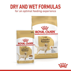 ROYAL CANIN Labrador Retriever Adult 3kg + Labrador Adult in Soße 10x140g