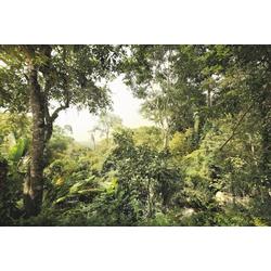 Komar Fototapete Dschungel, (4 St)