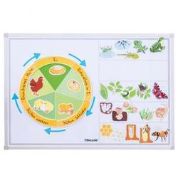 Lebenszyklus der Tiere