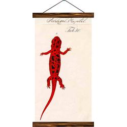 Vintage Lehrtafel - Salamanders