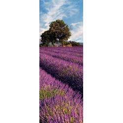 living walls Fototapete Lavendelfeld in der Provence, glatt, (1 St), FSC®