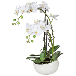 Kunstpflanze Orchidee Orchidee, Creativ green, Höhe 55 cm