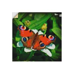 Artland Wandbild Tagpfauenauge, Insekten (1 Stück) 30 cm x 30 cm