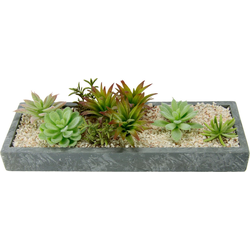 Kunstpflanze Succulenten in Schale Succulente, I.GE.A., Höhe 9 cm