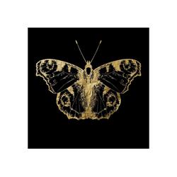 Leonique Acrylglasbild Nachtfalter 50 cm x 50 cm x 2,4 cm